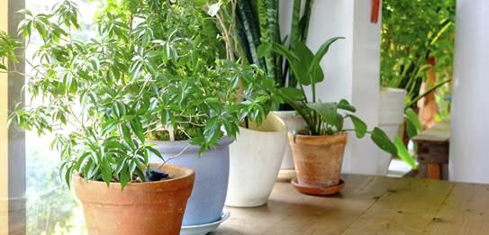hortus botaniucs