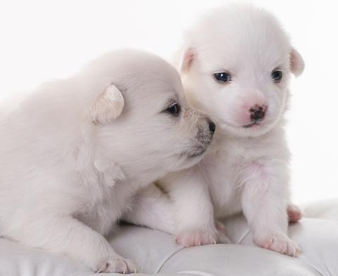 groene puppy