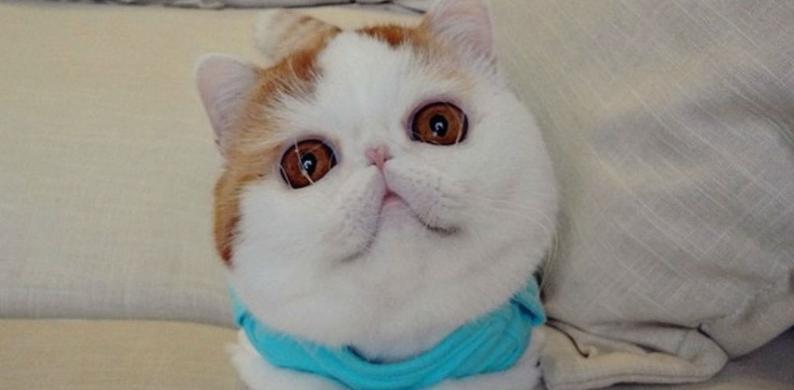 leukste katten