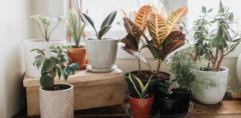 kamerplant doodgaat
