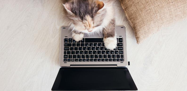 kat toetsenbord