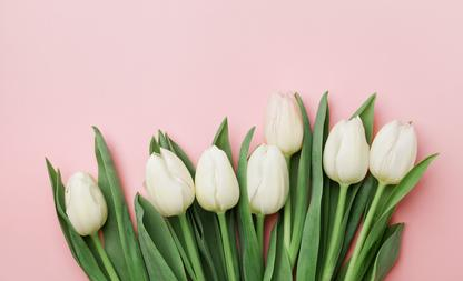 tulpen langer mooi