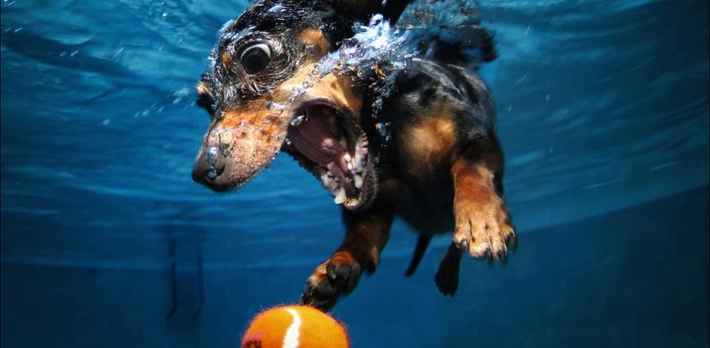 Zeer Onderwater foto's honden - Seth Casteel &DU08