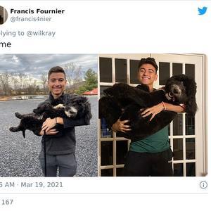 Honden toen en nu