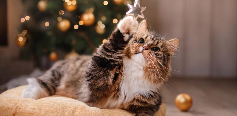 Kerstversiering katten