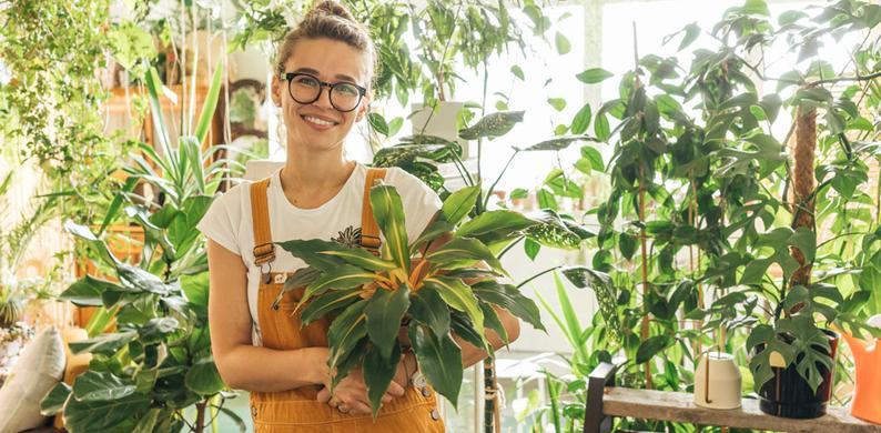 indoor planten