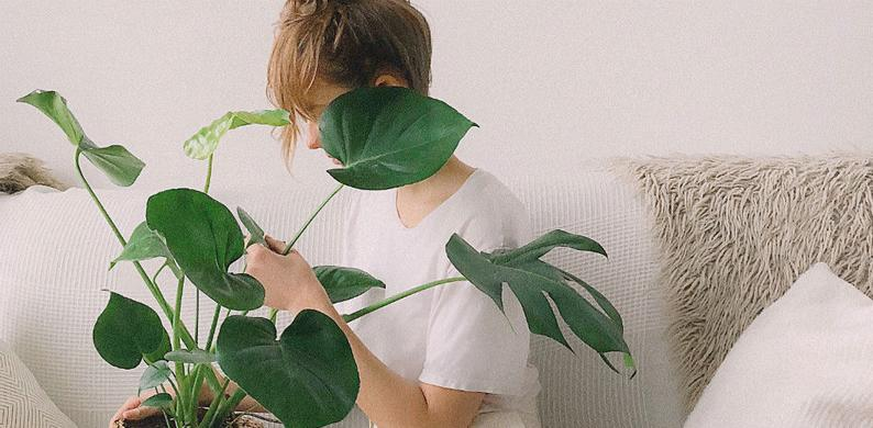 Kamerplanten Lidl