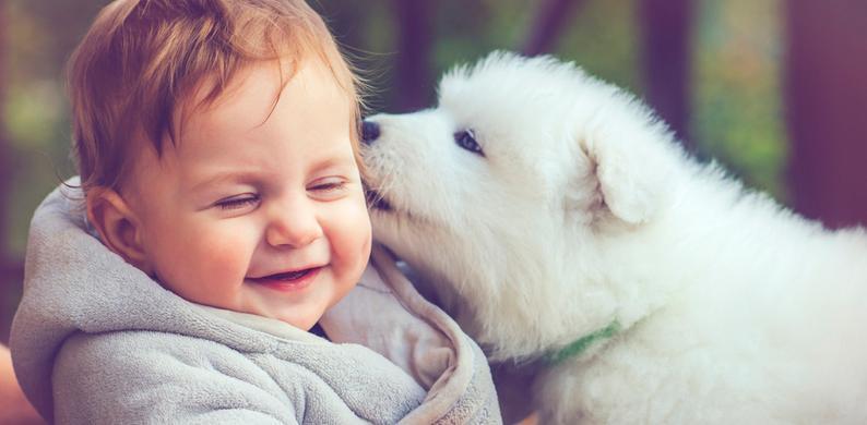 baby's honden taal
