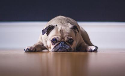 vestje hond voelt
