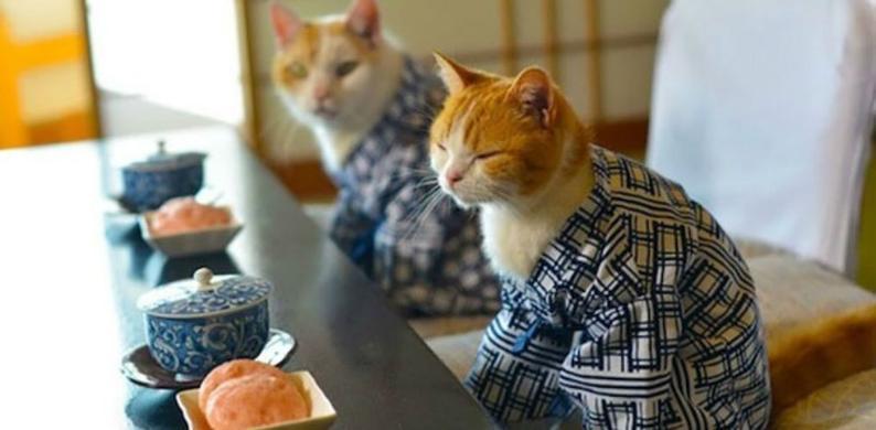 kimono cats