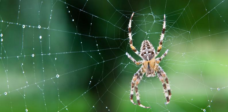 spinnen wegjagen