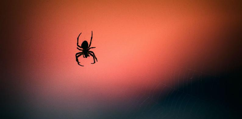 spinnen huis