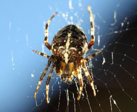 spinnen vangen