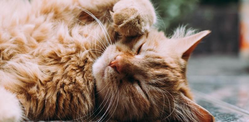 katten stem herkennen