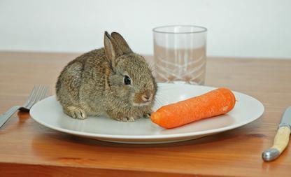 vegetarisch eten tips