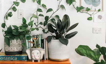 ui planten