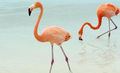 Flamingo droombaan